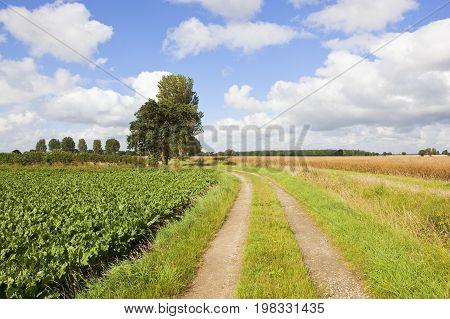 Curving Farm Track
