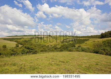 Green Grazing Meadows