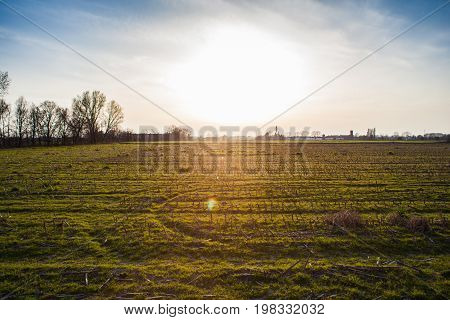 Field in the Po Valley at sunset