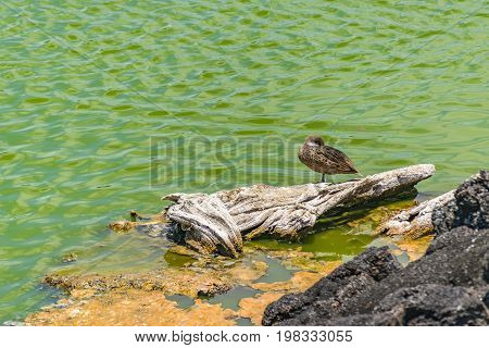 Bird Over Wood Trunk At Shore Of Ocean