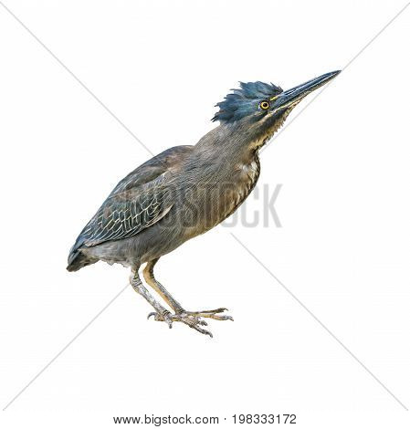 Exotic Bird Isolated Photo
