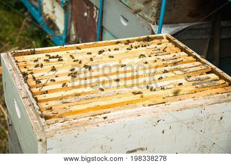 Many bees in an open hive in the hive half of the frames with honeycombs and honey