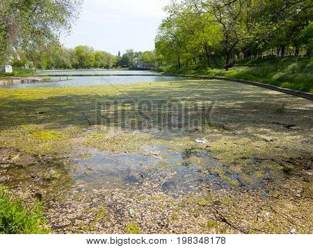 Authentic Landscape Polluted Pond In City Park. Sewage Drains Into The River, The Sea, The Lake. Env
