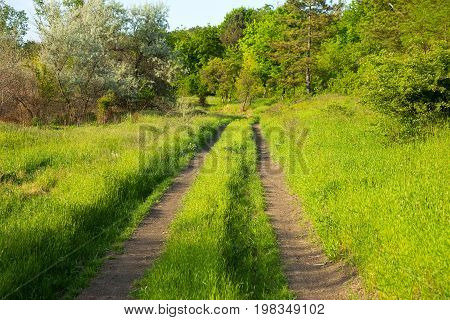 Beautiful Summer Landscape Country Road. Road, Overgrown With Lush Green Grass Stretches Into Distan