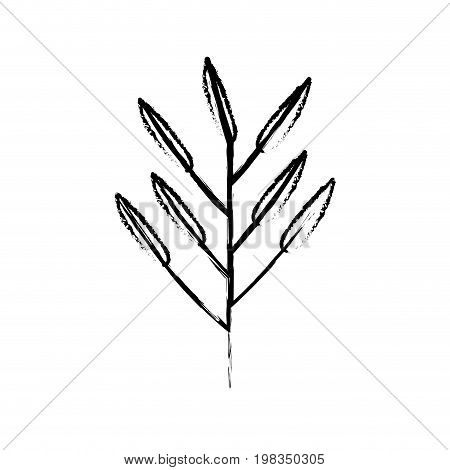 blurred silhouette of branch with leaves lanceolate vector illustration