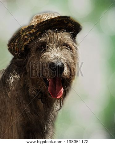 A young happy Irish wolfhound in a straw hat on a blurred green background. Portrait of a joyfully smiling dog. Concept on the theme of summer holidays.