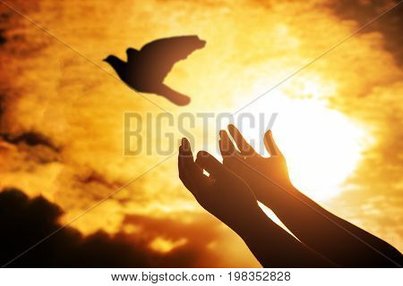 Man praying and free bird enjoying nature on sunset Human raising hands. Worship christian religion. silhouette pigeon flying out of two hand and freedom concept and international day of peace.