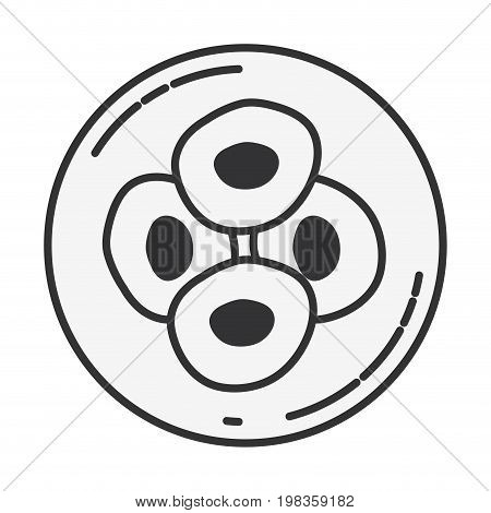 sketch silhouette of front view division of the ovule in cells vector illustration