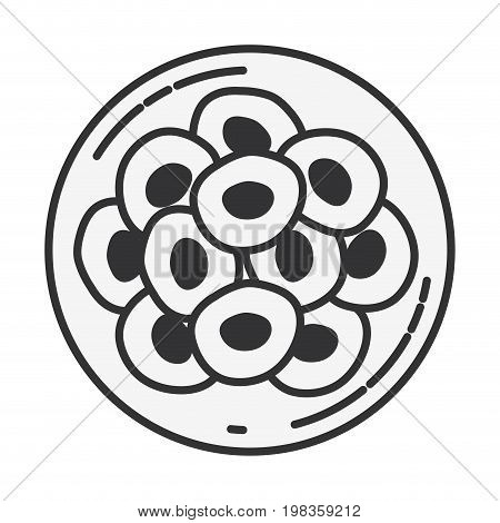 sketch silhouette of front view division of the ovule in several cells vector illustration