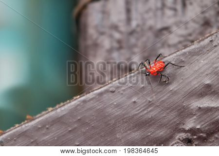 Red small insects on the wooden floor in the garden.