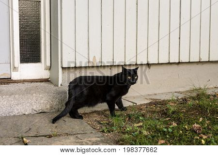 black cat outside a wooden house with white background