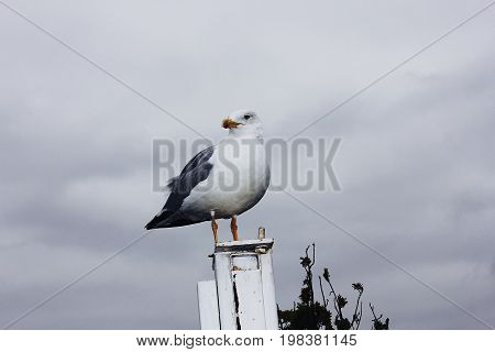 White seagull standing on a column against a cloudy sky background