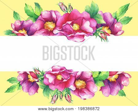 Banner with flowering pink roses (names: dog rose, rosa canina, Japanese rose, Rosa rugosa, sweet briar, eglantine), isolated on yellow background. Watercolor hand drawn painting illustration.