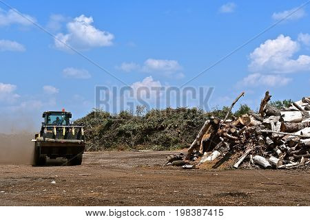 A front end loader with teeth  leaves a dust trail as it carries a log to a city compost pile of trees and branches