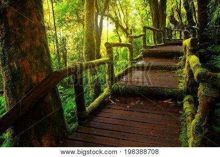 The roof of damp forest highest mountain in Doi Inthanon National Park Chiang Mai and Chai Range Thailand.