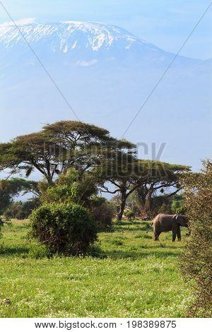 Elephant and mountain Kilimanjaro, Kenya. Eastest Africa
