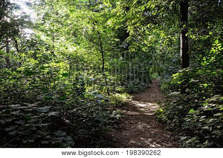 Path in a Summer Forest lit by Evening Sun Rays