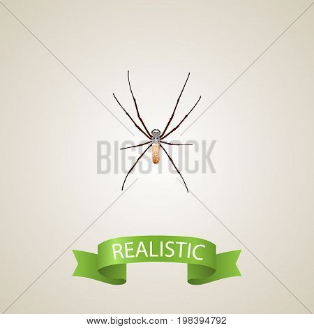 Realistic Arachnid Element. Vector Illustration Of Realistic Spider Isolated On Clean Background