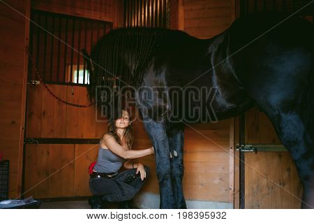 Woman Horseman Cleans From Dirt With Brush Friesian Horse In Stables On Farm, Taking Care Of Purebre