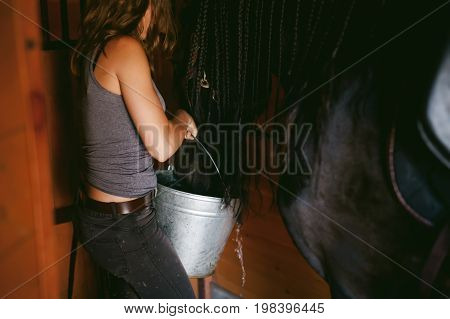 Female Horseman Holding A Bucket Of Water Quenching Thirst  Friesian Horse, In A Stable On A Farm, C