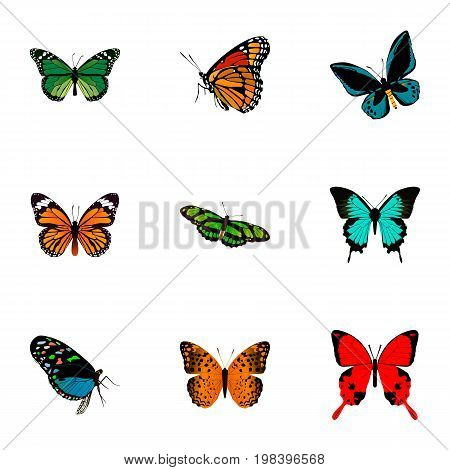Realistic Monarch, Copper, Danaus Plexippus And Other Vector Elements