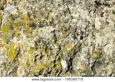 stone with moss at close range with texture