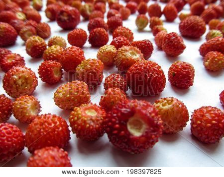 Wild strawberry close-up. Macro photography of ripe juicy berries of wild strawberry scattered on a white surface and blurred on the horizon