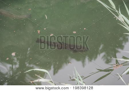 A Lake In The Mountains For Trout Breeding