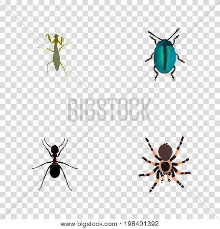 Realistic Bug, Ant, Tarantula And Other Vector Elements