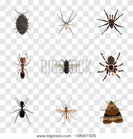 Realistic Dor, Midge, Butterfly And Other Vector Elements