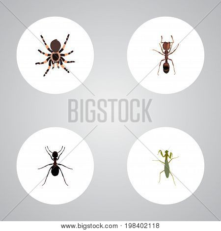 Realistic Tarantula, Grasshopper, Ant And Other Vector Elements
