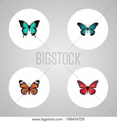 Realistic Monarch, Azure Peacock, Copper And Other Vector Elements