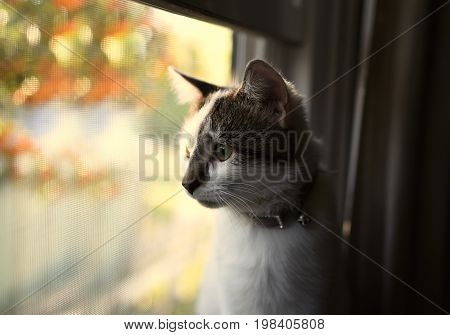 An image of a white and grey cat staring out a window.