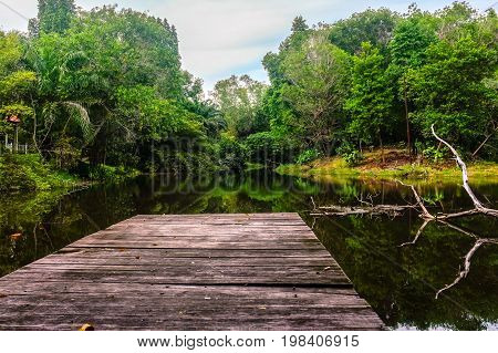 Wooden jetty forest and river on background.Nature and jungle conceptual.