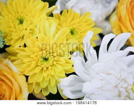 a beautiful exclusion integrity yellow and white color flowers