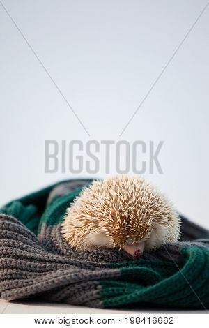 Close-up of porcupine on woolen cloth against white background