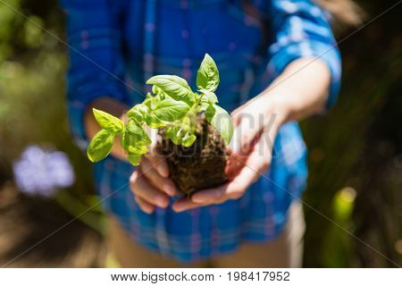 Mid section of woman holding sapling in garden on a sunny day