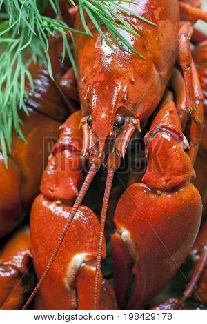 boiled crawfish, close up