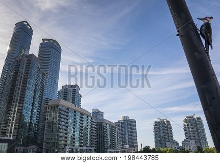 TORONTO,CANADA-AUGUST 2,2015:Blue Jay look the skyline of Toronto near the Metro convention centre in downtown Toronto during a sunny day