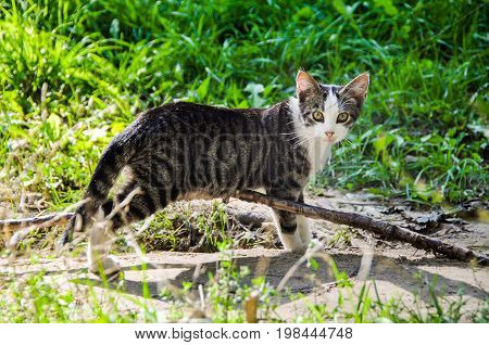 Homeless frightened cat on nature summer background