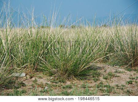 steppe grasses Barguzin valley Buryatia Russia. Russia  summer nature  travel