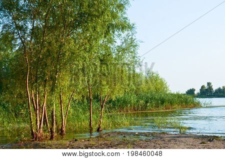 The young trees on the banks of the river sand