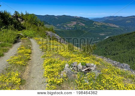 Beautiful Fir Trees On A Background Of Mountains Grand Park, Mount Rainier