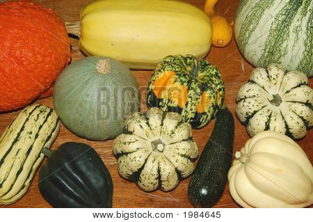 Squash Collection