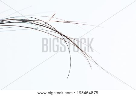Macro of human dark hair strands isolated on white background