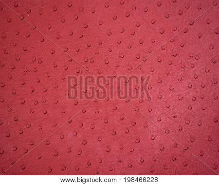 Background Textured Of Ostrich Leather