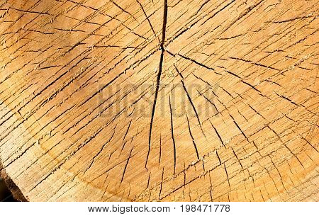 Cut Tree Stump Surface As A Background
