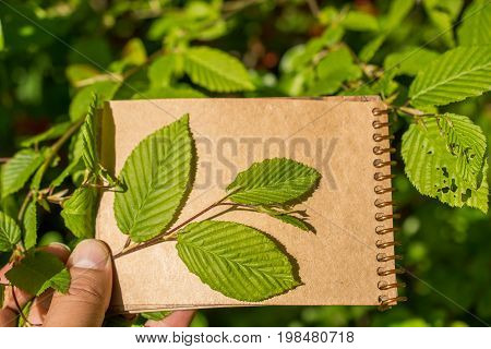 Tree Leaves Over A Notebook Page
