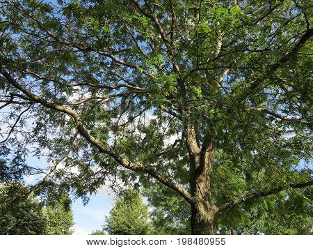 Trees in summer with blue skies and cloud formation