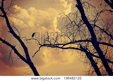 Silhouettes of bird and tree on the orange sunset background